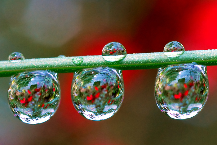 Macro Water Drop Photography from Steve Wall
