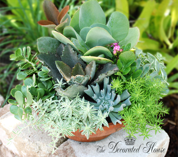 Donna Courtney of The Decorated House - How To Plant Succulents