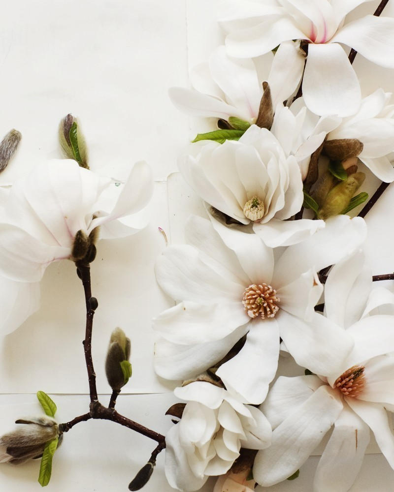 Creative Still Life Photography from Kari Herer - Magnolia on Etsy http://www.etsy.com/shop/kariherer