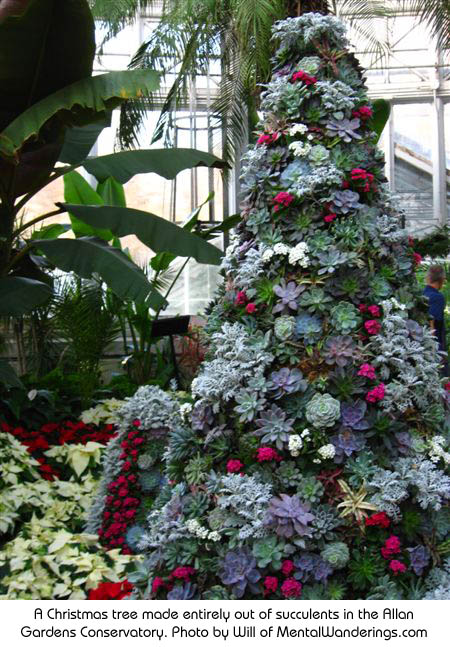 A Christmas tree made entirely out of succulents in the Allan Gardens Conservatory. Photo by Will of MentalWanderings.com http://www.mentalwanderings.com/photos/toronto/index.html