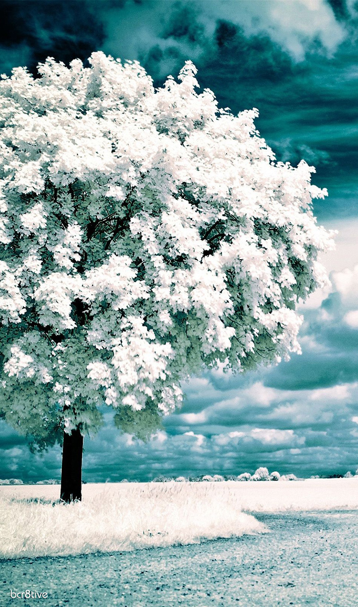 Infrared Trees Photography