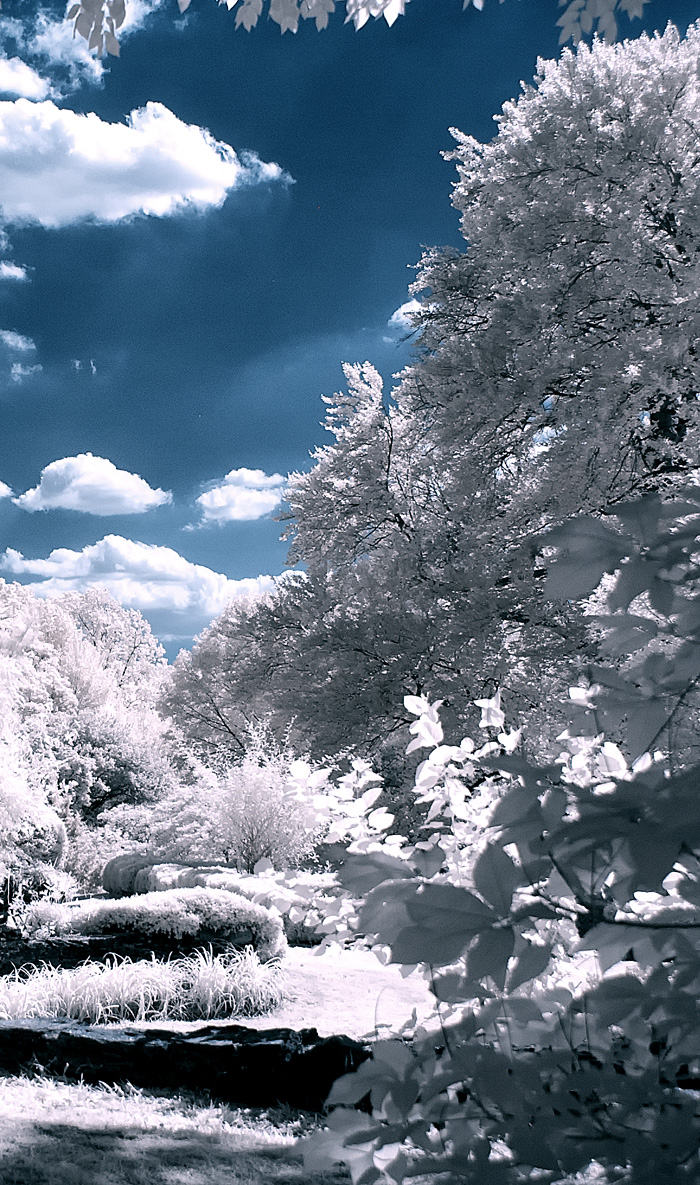 Infrared Trees Photography Jim Cutler