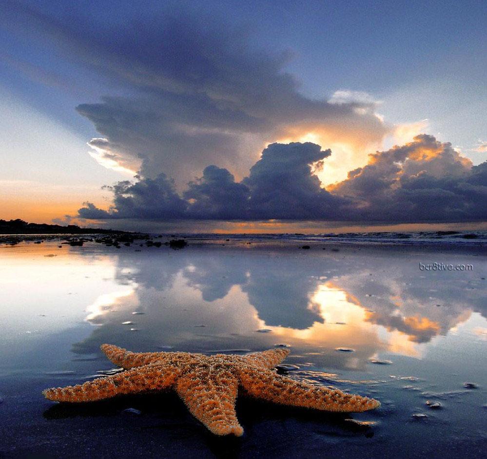 A Starfish Story