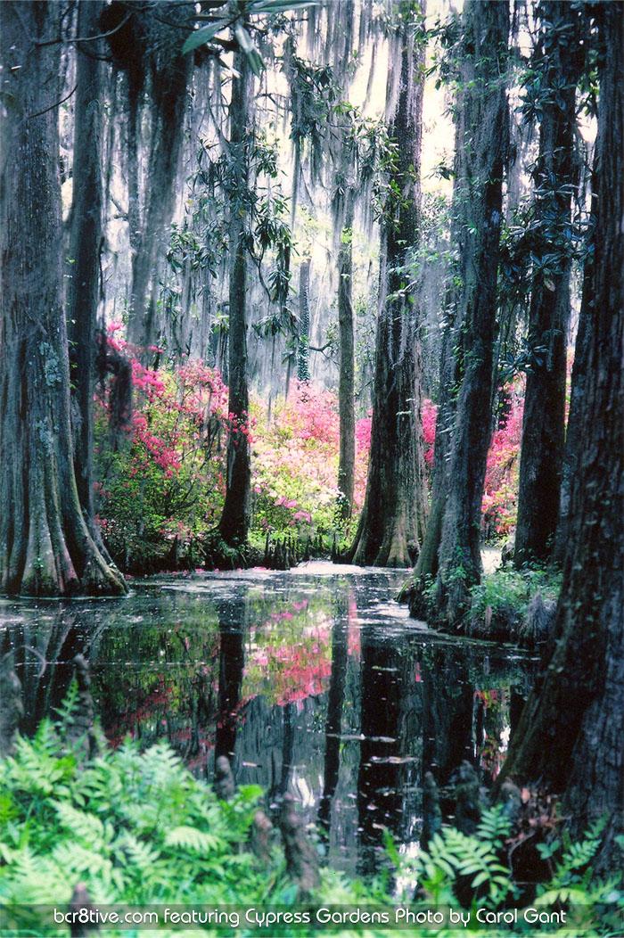 Cypress Gardens Fl by Carol Gant