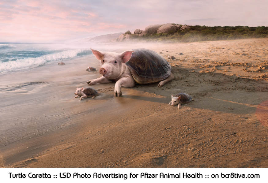 Turtle Caretta :: LSD Photo Advertising for Pfizer Animal Health :: on bcr8tive.com