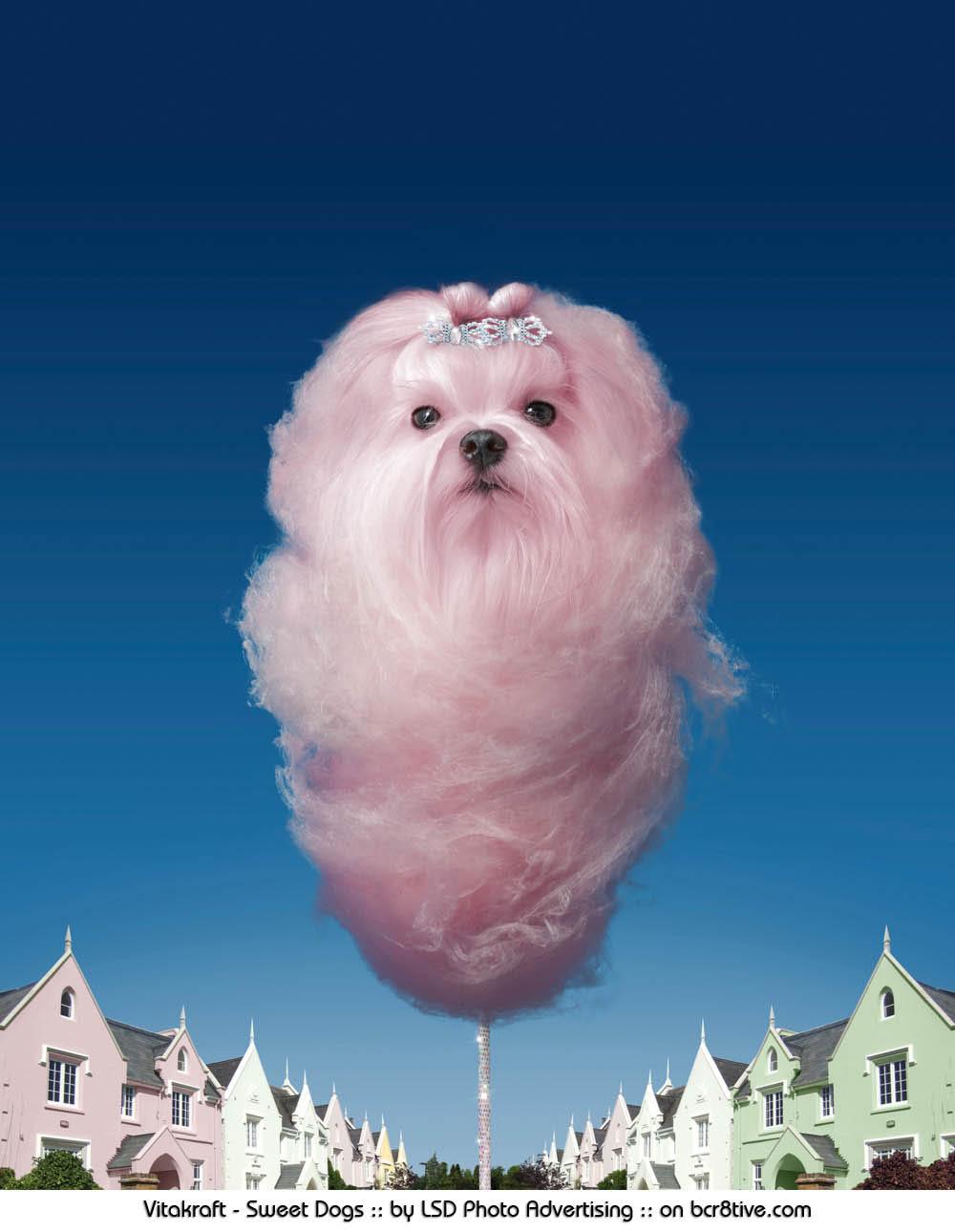 Sweet Dogs :: LSD Photo Advertising Studio :: on bcr8tive.com