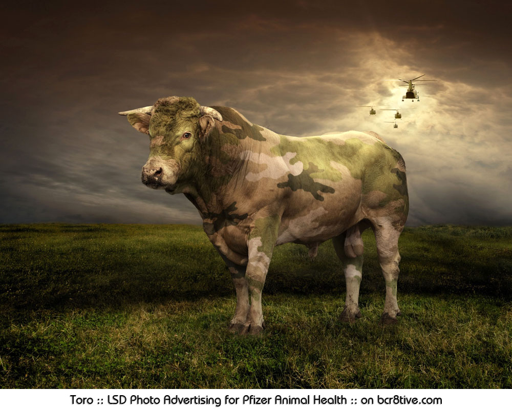 Toro :: LSD Photo Advertising for Pfizer Animal Health in Italy :: on bcr8tive.com