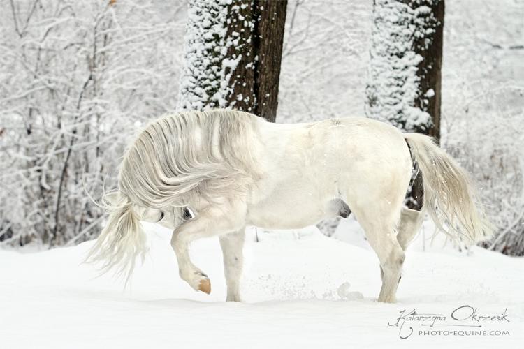 As White as Snow - Katarzyna Okrzesik